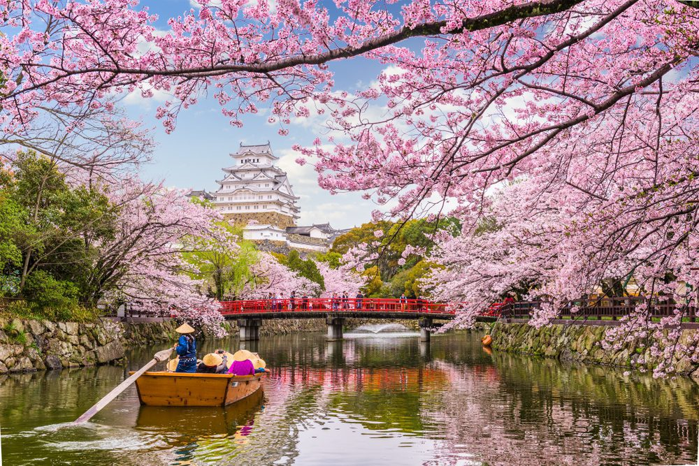 Tomorrow's World Today Japanese Cherry Blossom Festival 1